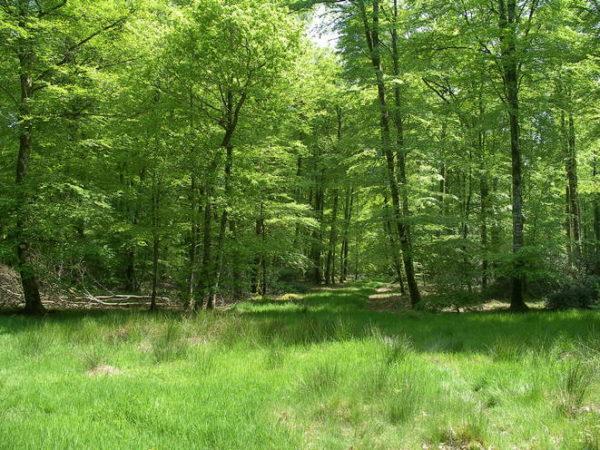 """La forêt, un """"super-commun"""" ?"""